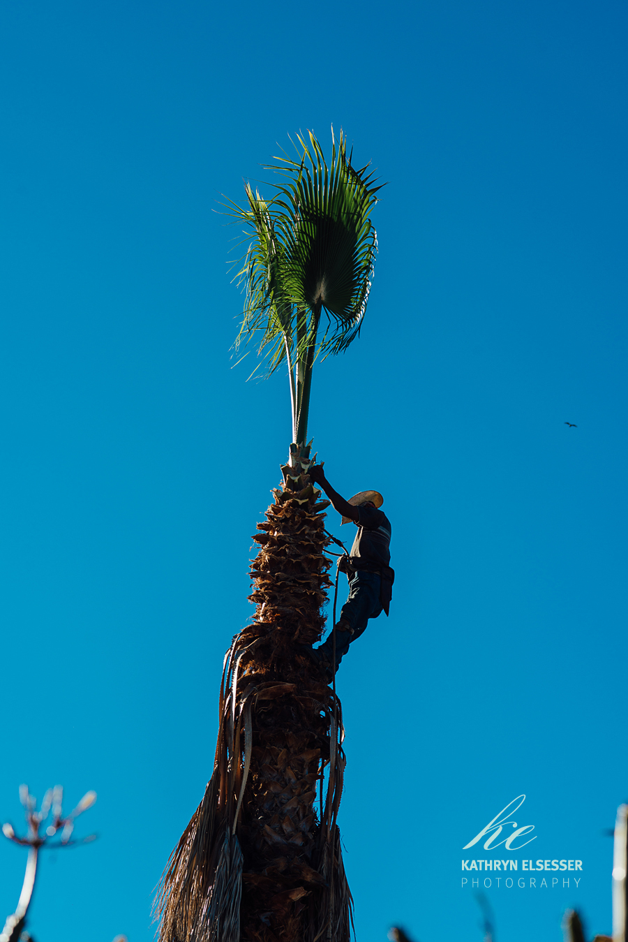 Collecting Palms in the village of La Candelaria in Baja, Mexico