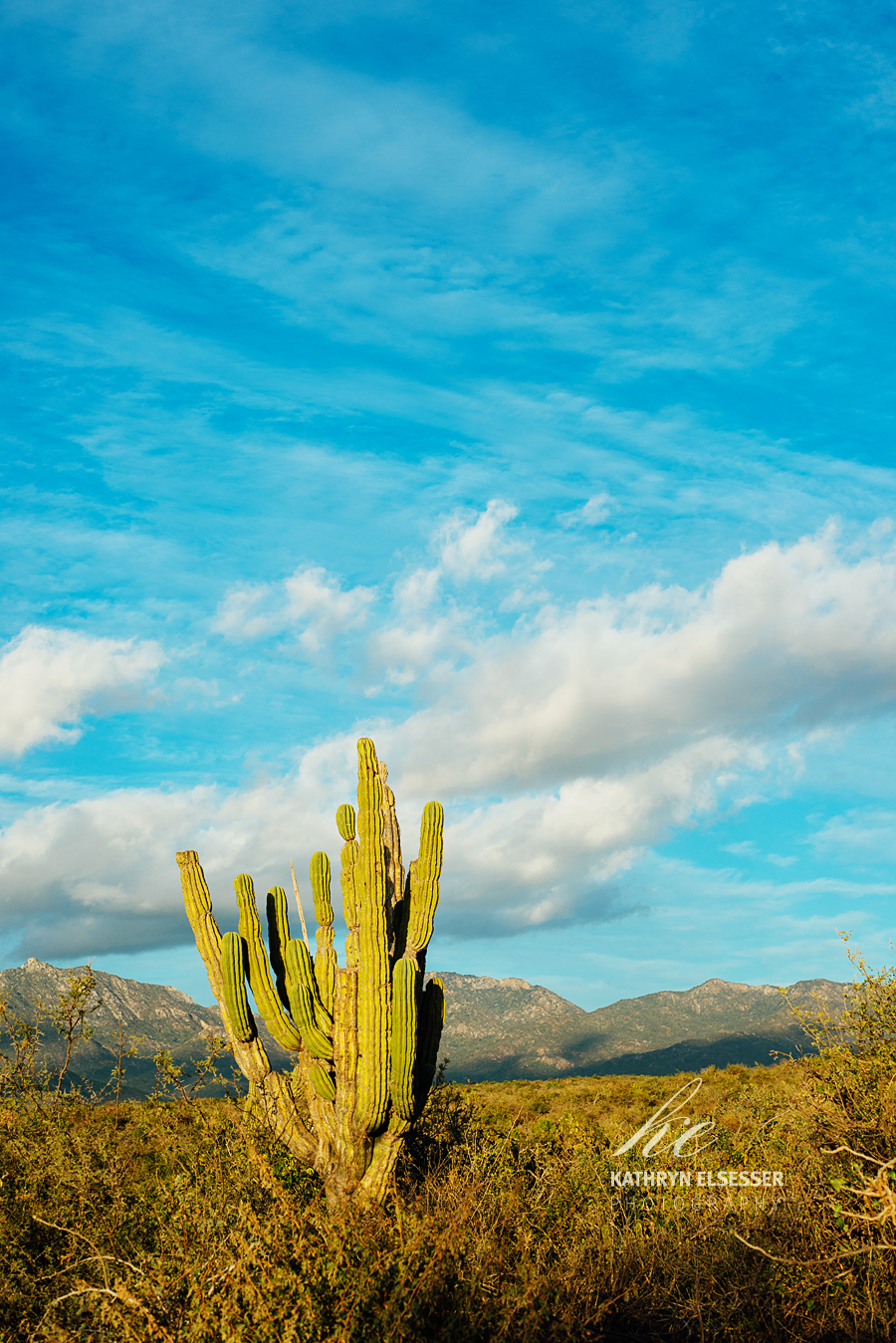 Cactus in the dessert in Baja, Mexico