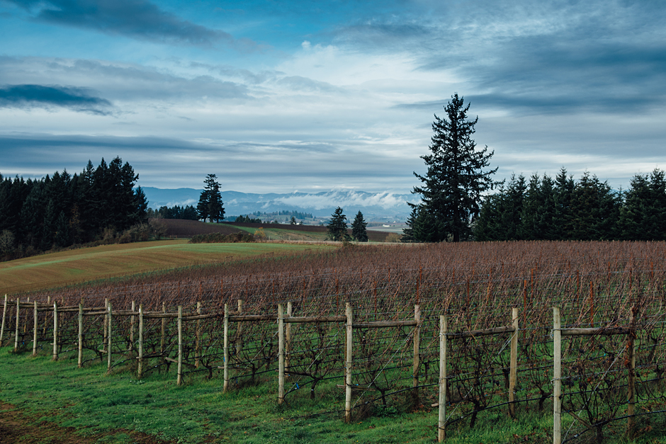 View of the vineyard at Carlton Cellars