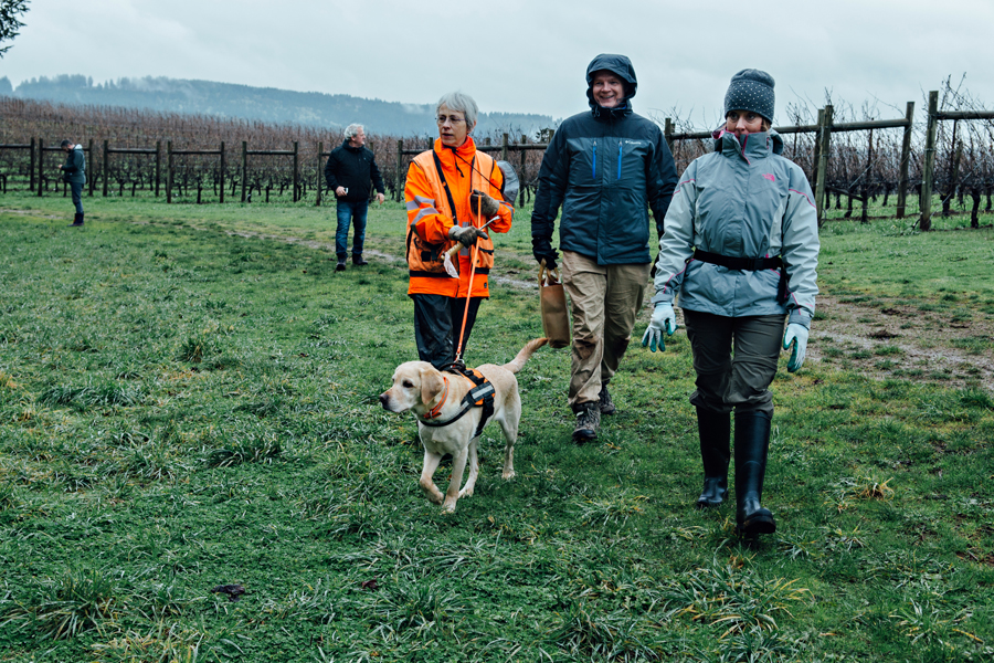 Truffle hunting in the winery at the Oregon Truffle Festival