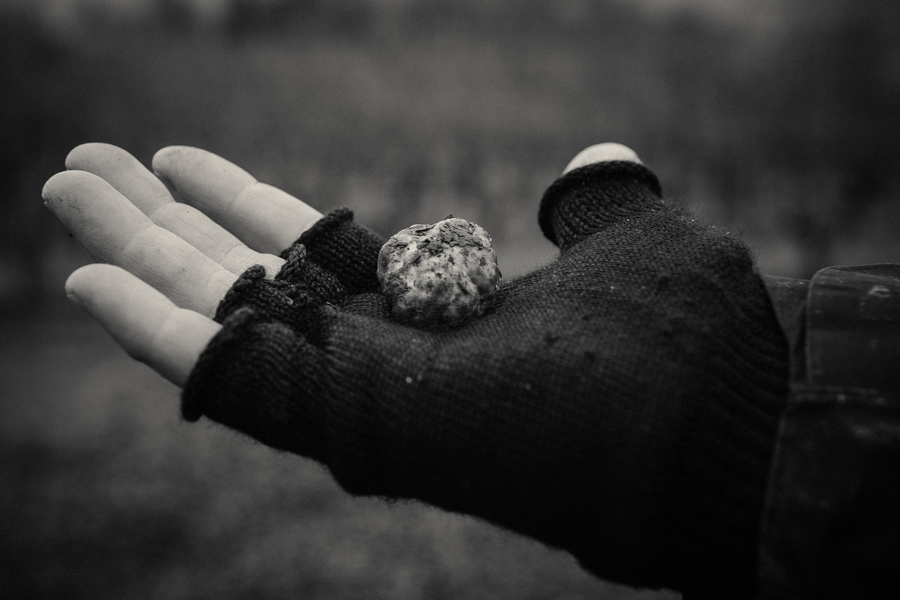 Woman's hand holding a foraged truffle