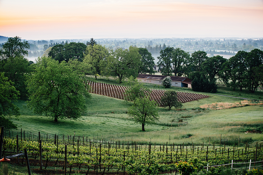 Sunrise at Natalie Estate Winery
