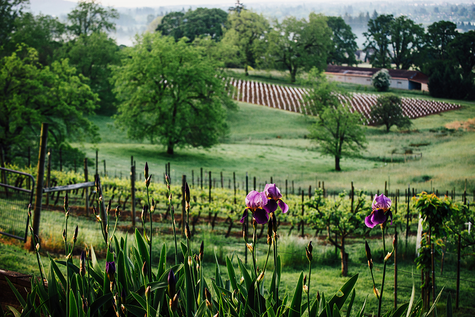 Early spring morning at Natalie Estate Winery